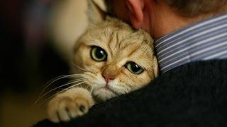 Как кошки показывают свою любовь нам.