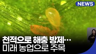 천적으로 해충 방제…미래 농업으로 주목 / KBS 20…