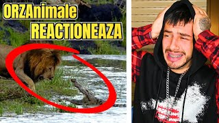 LEU vs CROCODIL || CARE BATE ?