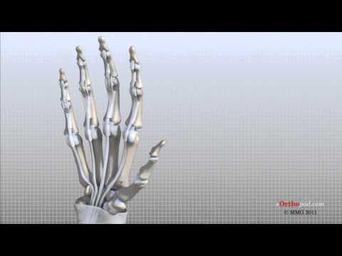 Hand Anatomy Animated Tutorial