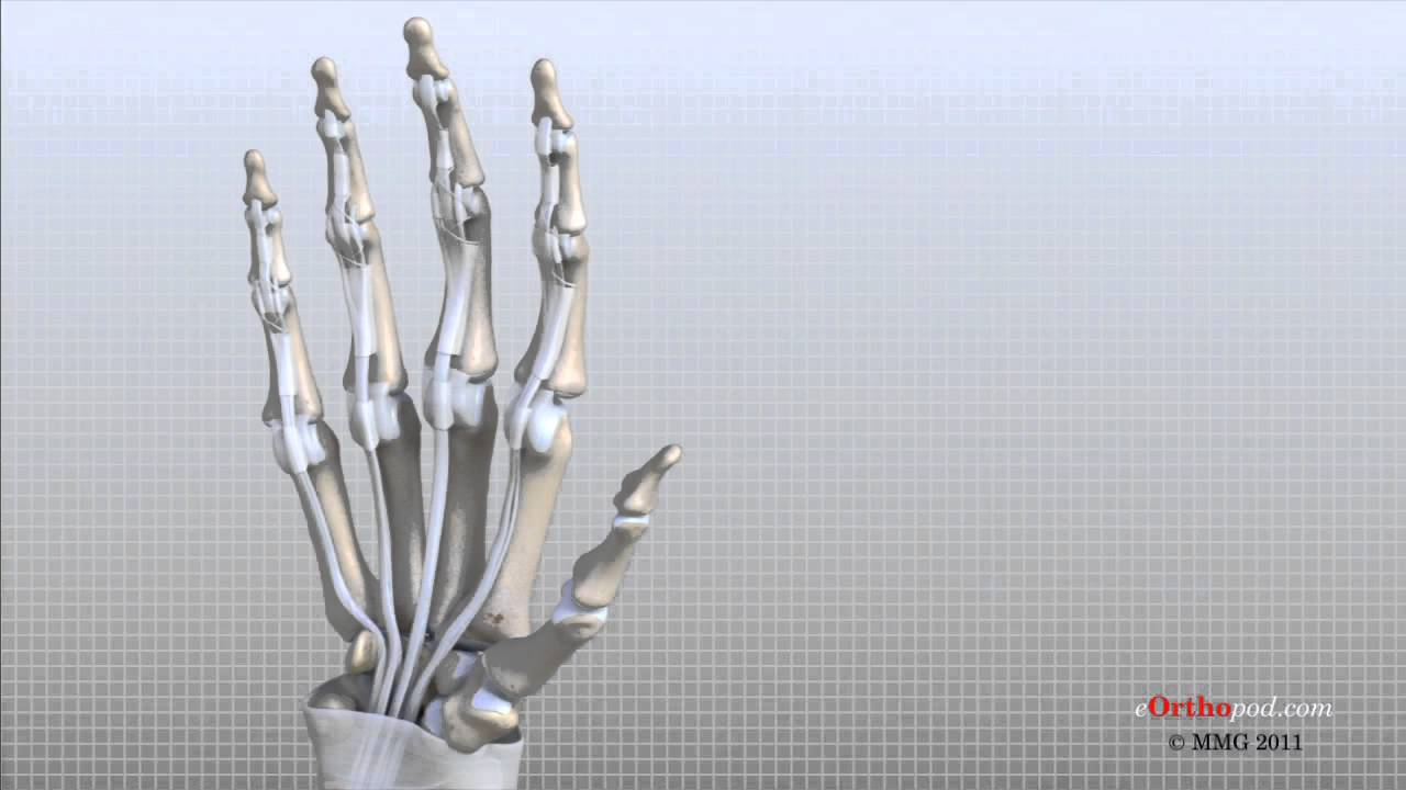 Hand Anatomy Animated Tutorial - YouTube