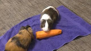 Морковь -  любовь или любовь -  морковь?❤️❤️❤️ Самое ленивое видео.