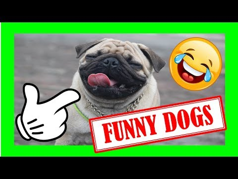 FUNNY DOG VIDEOS [COMPILATION 2019 ] TRY NOT TO LAUGH 🤣 🙈 | ▶ Guilty Dog Videos