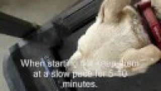 Treadmill Training Your Dog