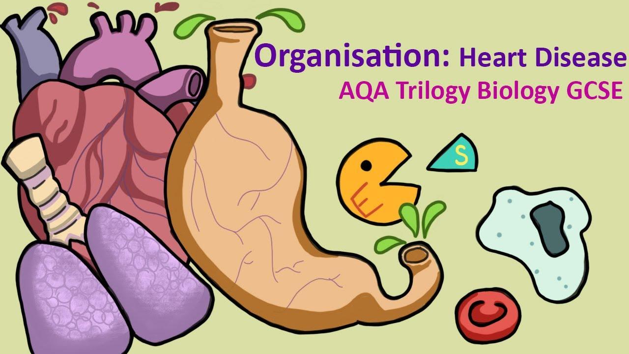 Science- GCSE - Biology - AQA - Organisation : Heart ...