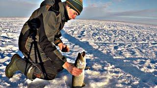 Зимняя Рыбалка на Щуку ЖЕРЛИЦЫ 2020 В Заповеднике