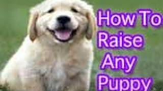 How To Raise A Well-behaved Puppy! (must-see)