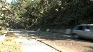 Rajaji National Park with state highway passing through