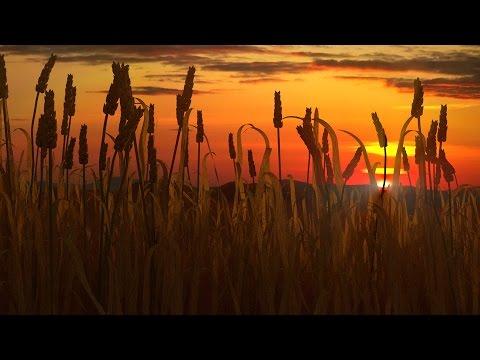 Blender Tutorial - Create a Sunset through Wheat