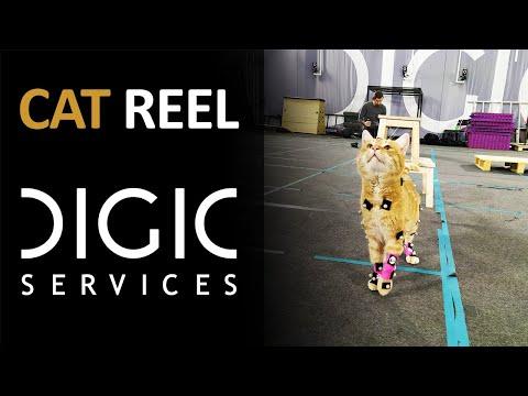 DIGIC Services - Cat Reel
