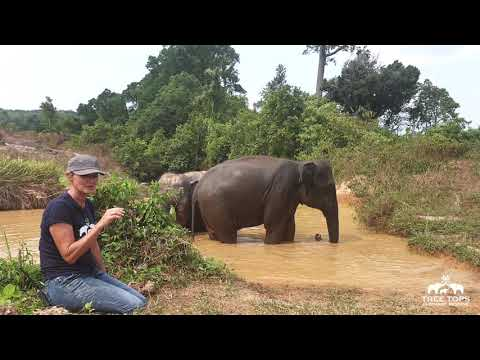 Why we do not bathe with elephants at Tree Tops Elephant Reserve