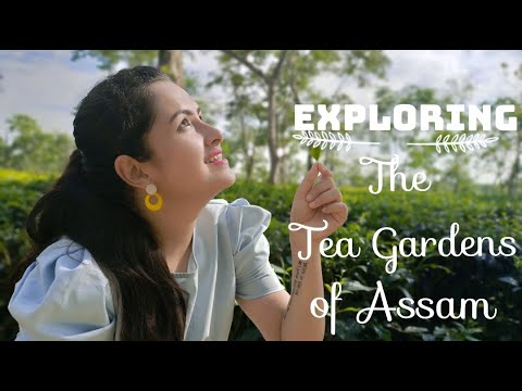 EXPLORING THE WORLD FAMOUS TEA GARDENS OF ASSAM | MANDY MISRA
