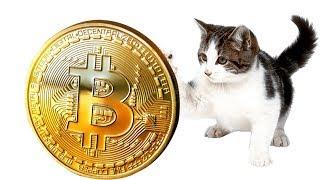Как заработать биткойны покупая кошек, играя в игру? / Интернет новости