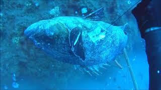 Deep Spearfishing With The World Champion George Vasiliou