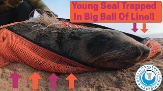 Young Seal Trapped in Big Ball of Line