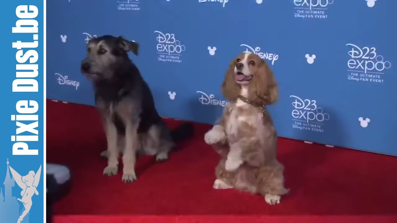 The Real Lady And The Tramp On Red Carpet Trailer Disney Youtube