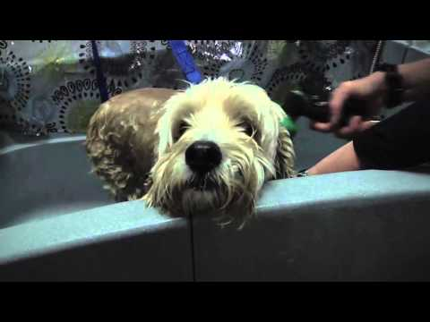 The Mutt Hutt Spaw And Pet Centre Kingston Youtube