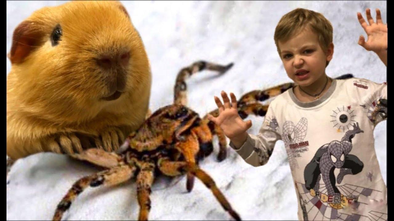 Нашествие и атака пауков. Почему большие пауки появились в нашем доме? Паутина от spider
