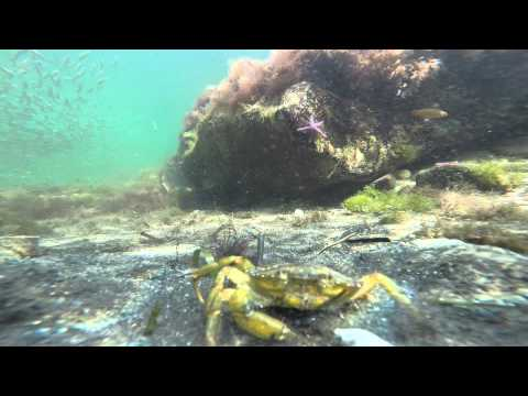 """""""The Shrimp Fight"""" on the seabed - 11 June 2014 - GoPro Hero3+"""