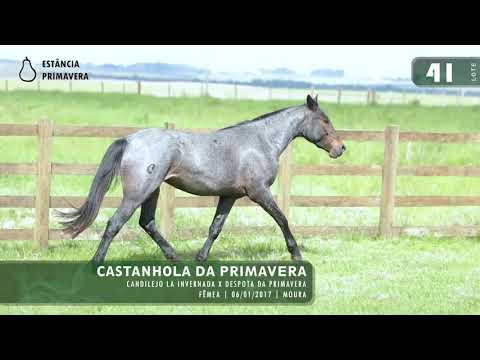 LOTE 41 - Castanhola da Primavera