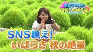 磯山さやかの旬刊!いばらき『コキア』(平成29年9月15日放送) 磯山さやか 検索動画 28