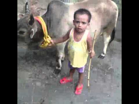 Cow's of alimuddin street (Ahad)