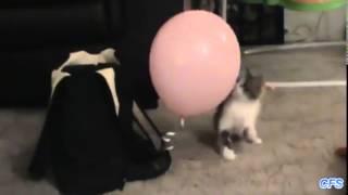 Коты против воздушных шариков (2015) | Cats vs balloons compilation