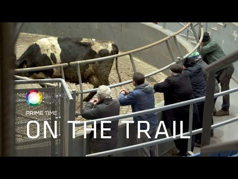 Mart Madness in Fermoy | On The Trail