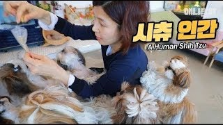 시츄가-많으면-할-수-있는-것-3-ㅣ-what-you-can-do-with-lots-of-shih-tzus-ep3-a-human-shih-tzu