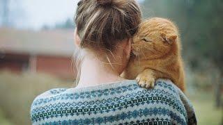 Cat's best photos #6   Подборка приколов с котами (Кошачья любовь( ˘⌣˘)♡(˘⌣˘ ))