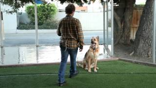 The Best Ways To Train Your Doggy : Raising Your Dog