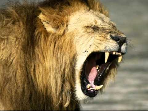 Charles Spurgeon Sermon - The Roaring Lion