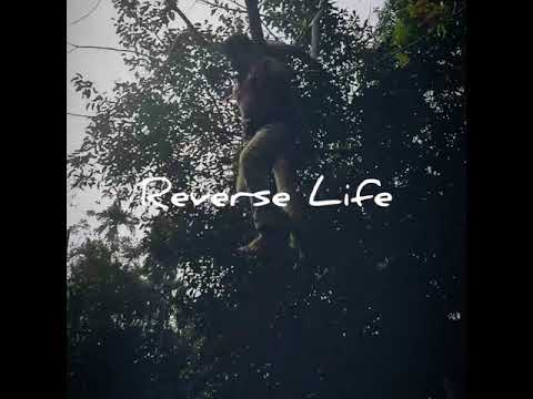 Reverse Life at Bhola to Dhaka Video/traveling/Music/awesome Etc