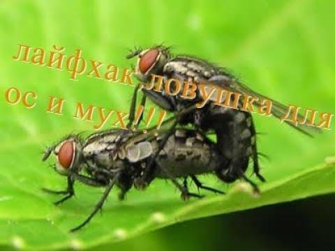 Лайфхак!!Ловушка для ос и мух очень эффективная!!!