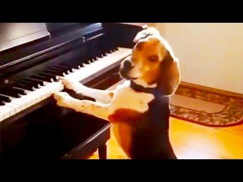 Смешные коты и собаки Танцующие животные