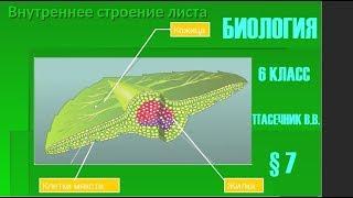 Биология 6 класс § 7 (Автор: Пасечник В.В. )  Клеточное строение листа