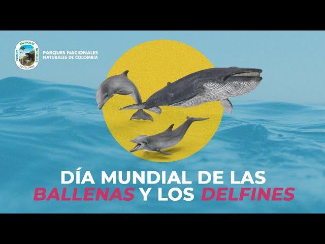 Ballena y delfines