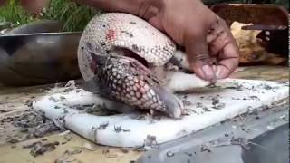 Armadillo hunting in Florida ( graphic) catching wild animals for food. catch and cook