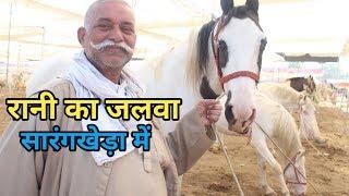 sarangkheda horse  market 2018 - सोनपुर के बाद अब रानी का जलवा सारंगखेड़ा में