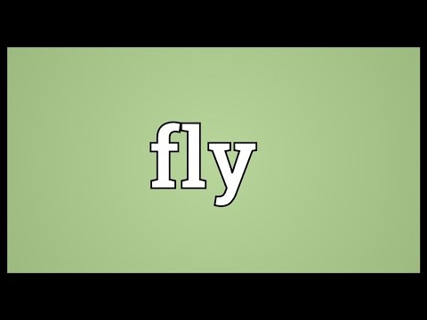 Fly Meaning