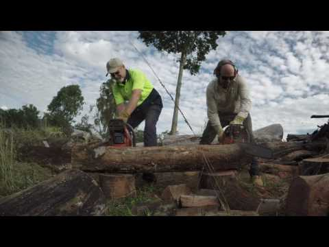 Husqvarna 365 vs. Chinese $109 MTM SX62 chainsaw