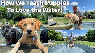 How We Teach Puppies To Love The Water | Labrador Retriever Puppy Training Session