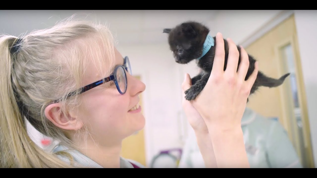 About - Independent Vetcare