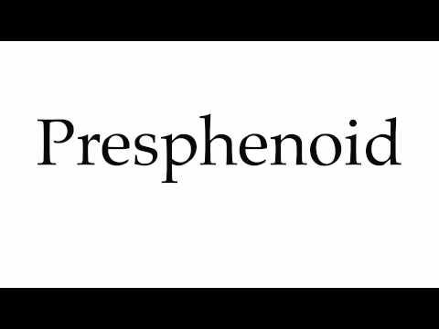wn - presphenoid, Human body