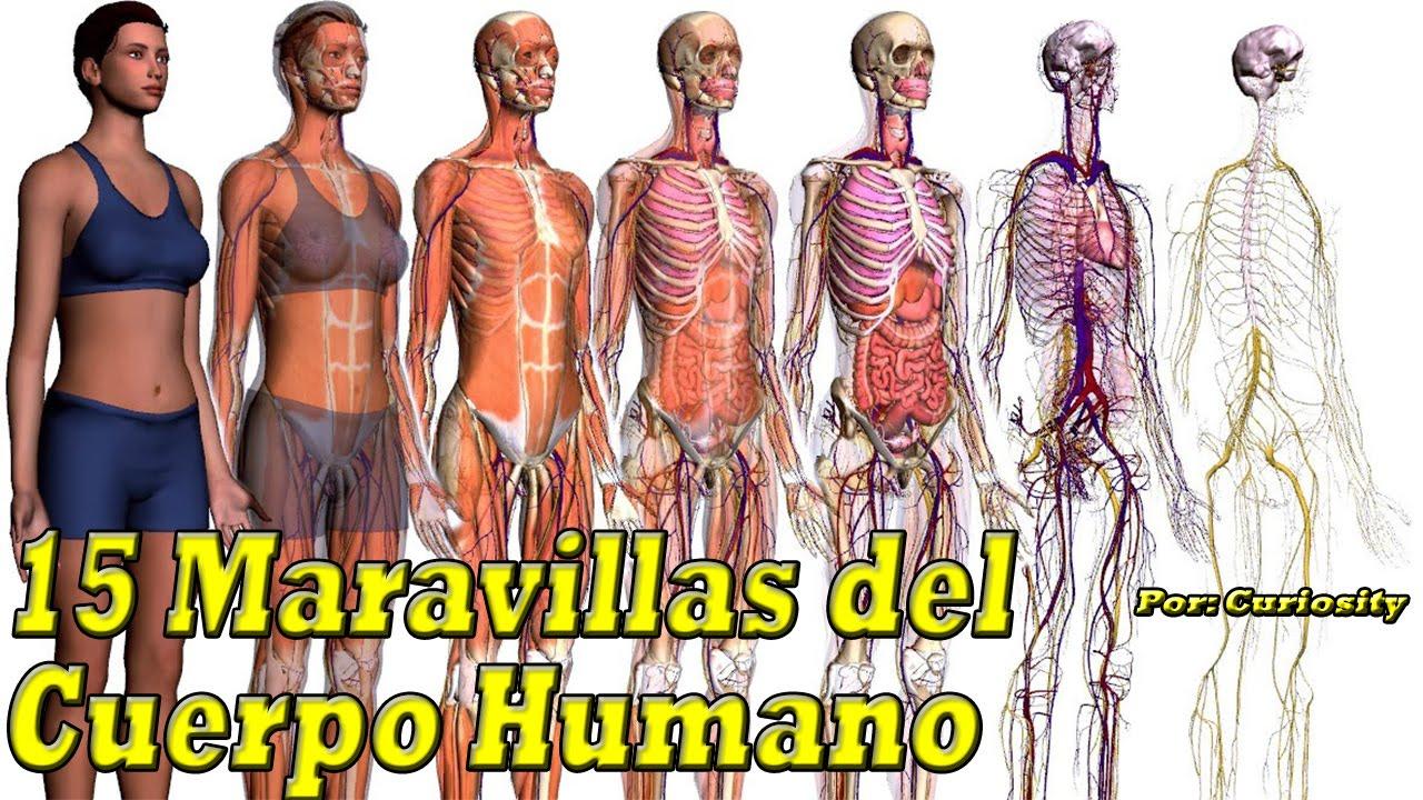 15 Datos Interesantes de nuestro Cuerpo | Maravillas del Cuerpo ...