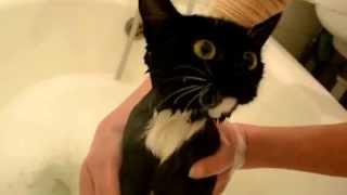 кошки приколы смешные топ видео 2014 животные кошки