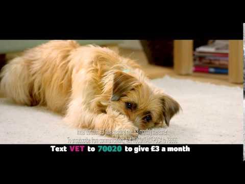 PDSA Regular Donation Ad