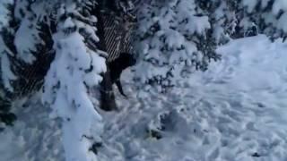 Bull Terrier & Cane Corso - First Snow