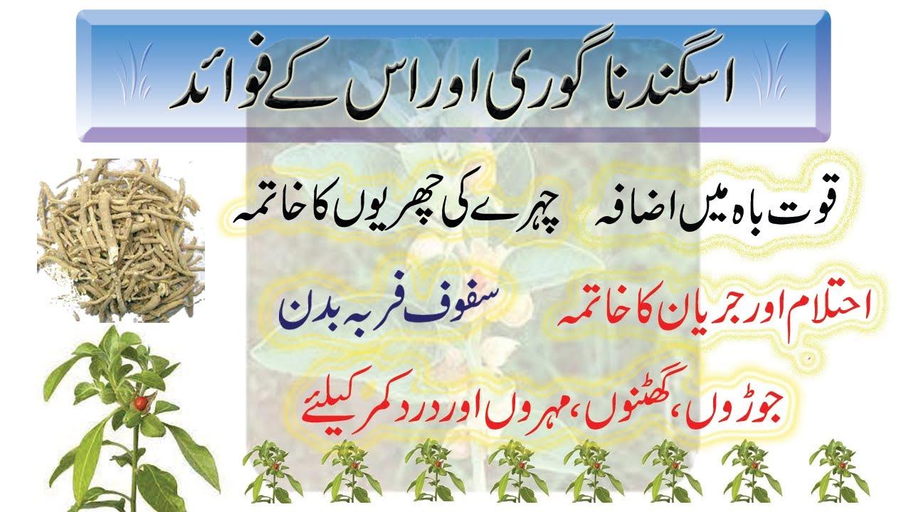 Download Asgand nagori ke fayde in urdu / Ashwagandha benefits for human / Withania somnifera / Winter cherry