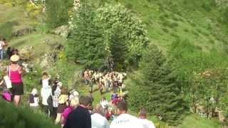 Transhumance cévenole Mélange des troupeaux au Col de l'Asclier Troupeau de Massevaques